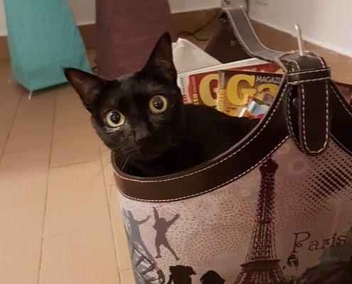 un gatto nero a Parigi